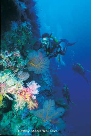 Wa Diving Experiences